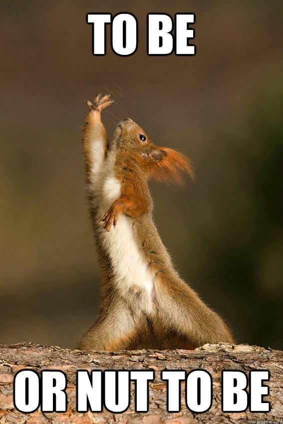 Hamlet Squirrel