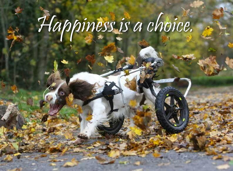 71262-Happiness-Is-A-Choice